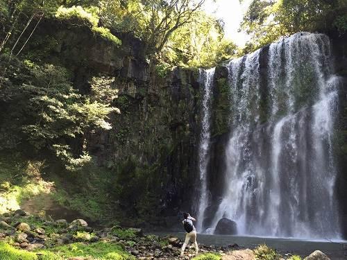 ダイナミックな桜滝をお届けしようと、カメラを構えるも、滝の勢いに吹き飛ばされそうに。