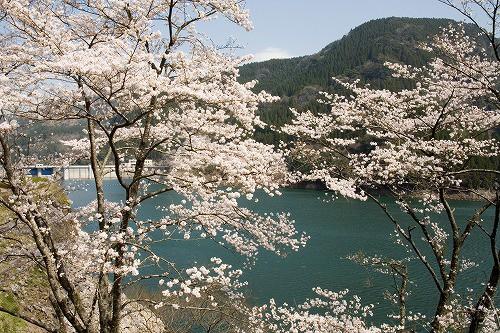 蜂の巣湖2