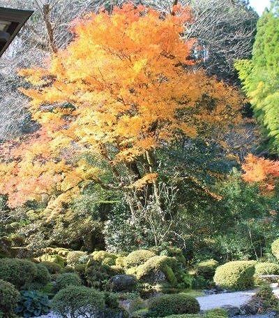 伝来寺庭園の紅葉風景