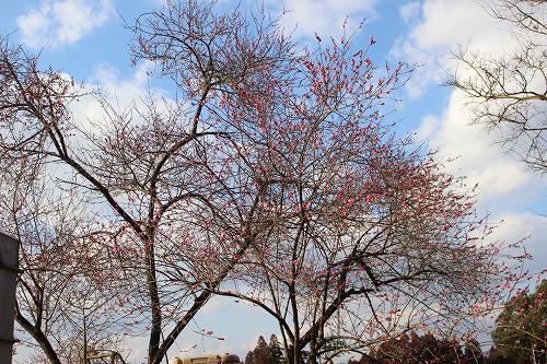 青空に映える、小さな春です。