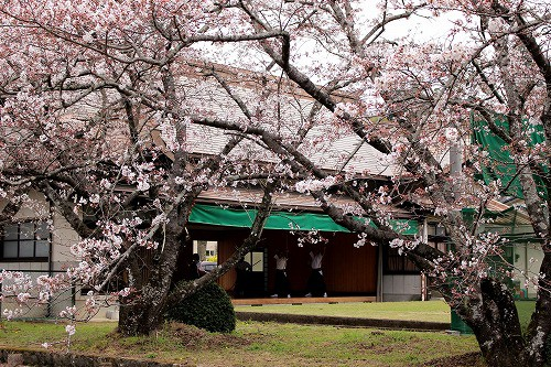 弓道場横の桜並木も素敵ですよ